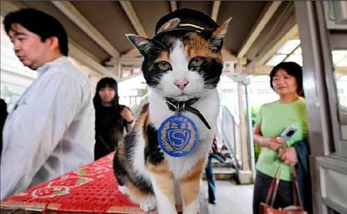 日本 猫站长