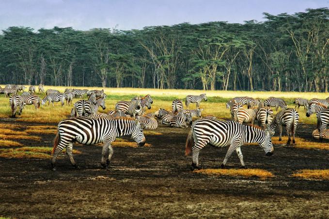 南非动物大迁徙之旅 (6).jpg