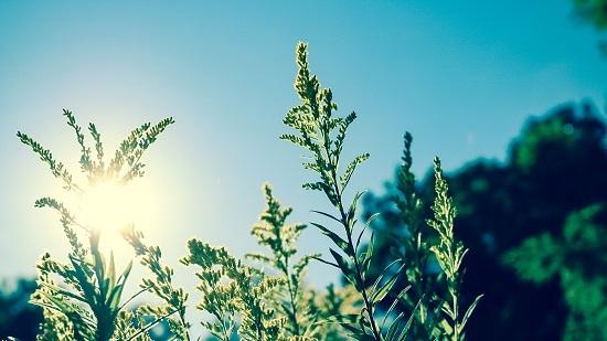 紫外线 夏天 阳光 紫外线伤害