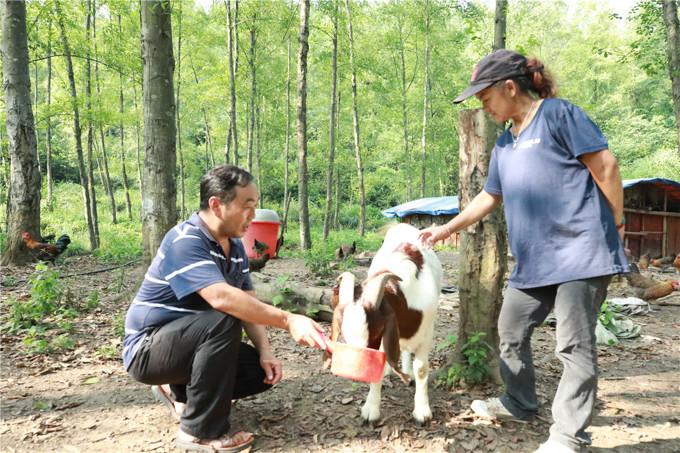 田家云带领村民一起发展产业脱贫致富,组织收购、销售蔬菜、水果及农产品、家禽家畜及蜜蜂养殖,给村民开展技术培训、咨询服务。662A0012.JPG