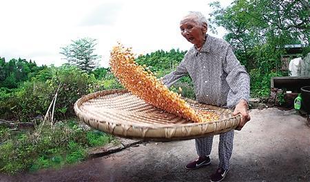 百岁老人 郑世祥 百岁婆婆 长寿老人