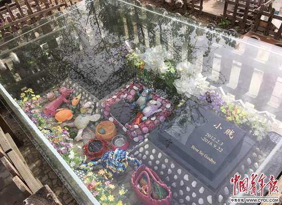 宠物 中国 宠物墓地