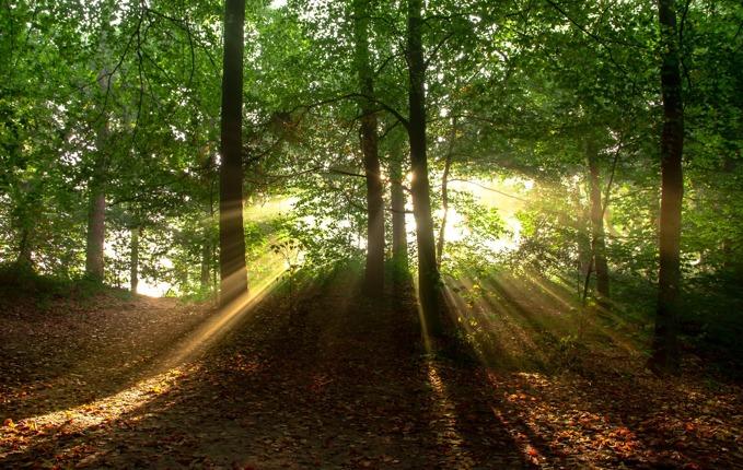 landscape-nature-sun-forest-11435.jpg
